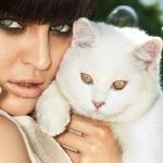 Gatos do Gatil Catway participam da campanha da Via Marte 2012