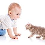 Bebês que convivem com cães e gatos têm menos problemas respiratórios