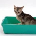 Xixi de Gato: Problemas e Soluções