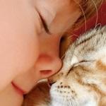 Como se comunicar com o seu gatinho Scottish Fold ou British Shorthair