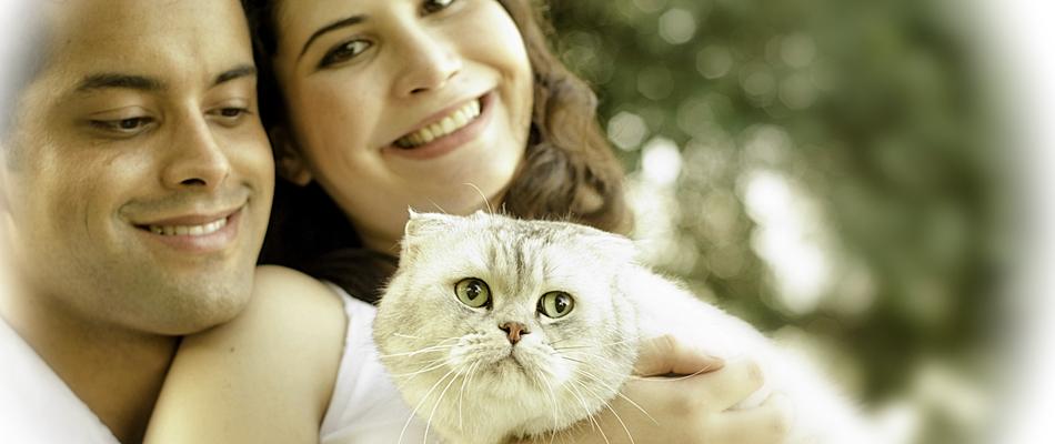 Gatil Catway      –       www.catway.com.br